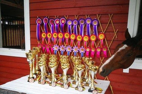 Žirgų Konkūro Varžybos